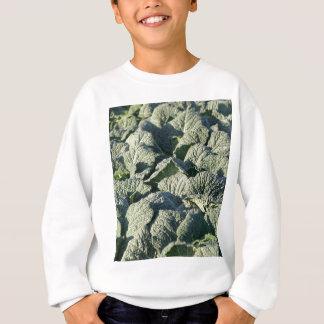 Savoy cabbage plants in a field. sweatshirt