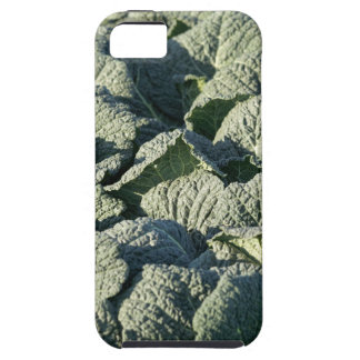 Savoy cabbage plants in a field. tough iPhone 5 case