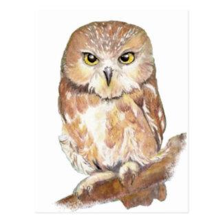 Saw Whet Owl, Watercolor Bird Collection Postcard