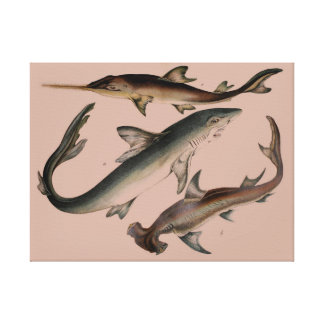 Sawing shark & CO Stretched Canvas Print