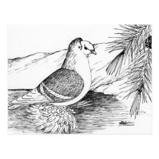 Saxon Shield Pigeon 1973 Postcard