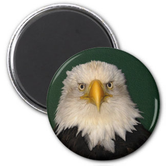 """SAY WHAT?"" Bald Eagle Magnet"