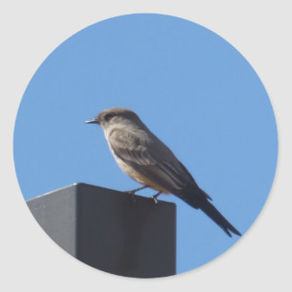 Say's Phoebe Sticker