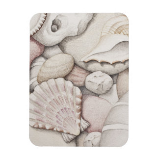 Scallop Shell & Pebbles in Pencil Photo Magnet