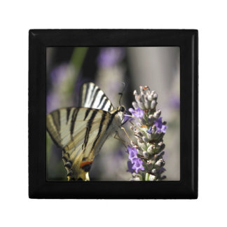Scarce Swallowtail (Iphiclides podalirius) Small Square Gift Box