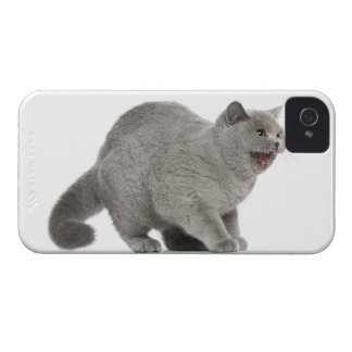 Scared British Shorthair hissing (8 months old) iPhone 4 Covers