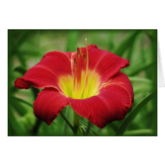 Scarlet Bloom - Daylily Card