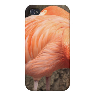 Scarlet Flamingo iPhone 4 Covers