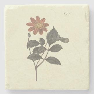Scarlet Flowered Dahlia Botanical Illustration Stone Coaster