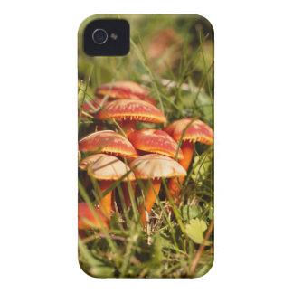 Scarlet hood fungi, Hygrocybe coccinea iPhone 4 Case
