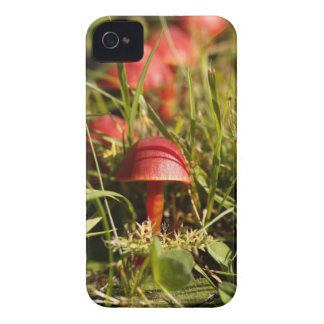 Scarlet hood fungi, Hygrocybe coccinea iPhone 4 Cases
