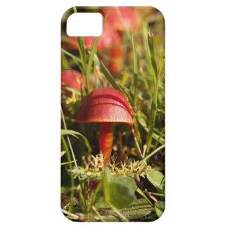 Scarlet hood fungi, Hygrocybe coccinea iPhone 5 Case