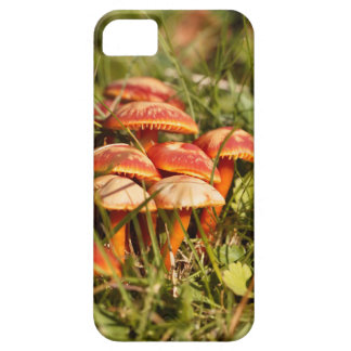 Scarlet hood fungi, Hygrocybe coccinea iPhone 5 Cases