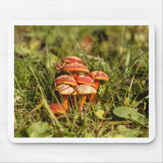 Scarlet hood fungi, Hygrocybe coccinea Mouse Pad