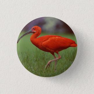Scarlet ibis 3 cm round badge