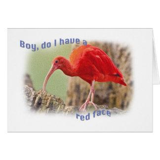 Scarlet Ibis Bird Belated Birthday Card