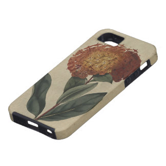 Scarlet Ixora iPhone 5 Cover