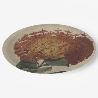Scarlet Ixora Paper Plate