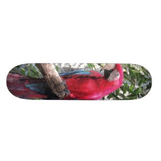 Scarlet Macaw bird - Skateboard