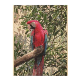 Scarlet Macaw bird Wood Prints