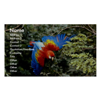 Scarlet macaw business card template