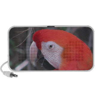 Scarlet Macaw - Close Up PC Speakers