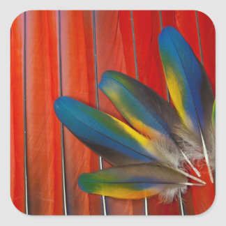 Scarlet Macaw Feather Design Square Sticker