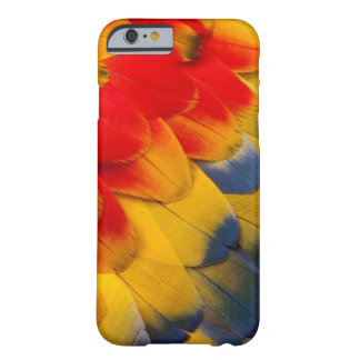 Scarlet Macaw feathers close-up Barely There iPhone 6 Case