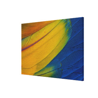 Scarlet Macaw Feathers Close-Up Canvas Print