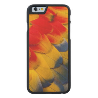 Scarlet Macaw feathers close-up Carved® Maple iPhone 6 Slim Case