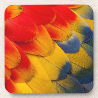 Scarlet Macaw feathers close-up Coaster