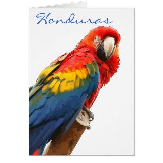 Scarlet Macaw Honduras Note Card
