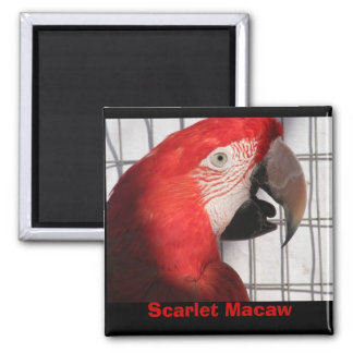 Scarlet Macaw Magnet