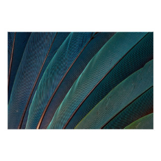 Scarlet macaw parrot feather poster