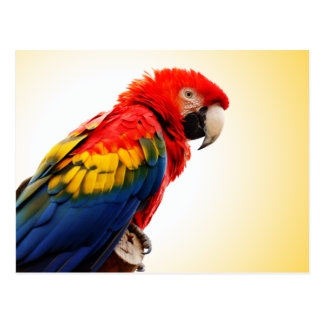 Scarlet Macaw Postcard