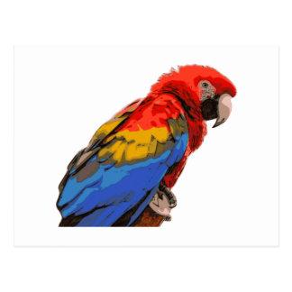Scarlet_Macaw Postcard