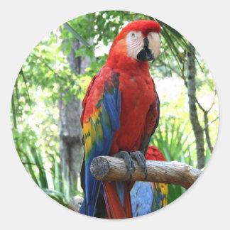 Scarlet macaw, red macaw photograp design round sticker