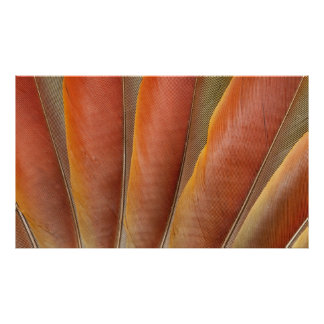 Scarlet Macaw Red-Orange Feathers Poster