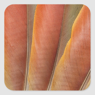 Scarlet Macaw Red-Orange Feathers Square Sticker