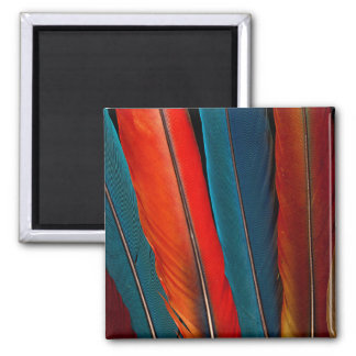 Scarlet Macaw Tail Feathers Magnet
