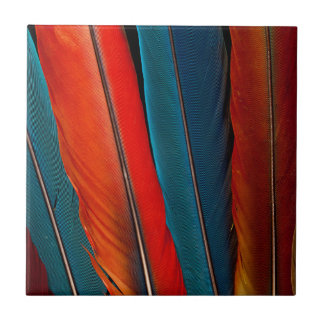 Scarlet Macaw Tail Feathers Small Square Tile