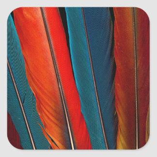 Scarlet Macaw Tail Feathers Square Sticker