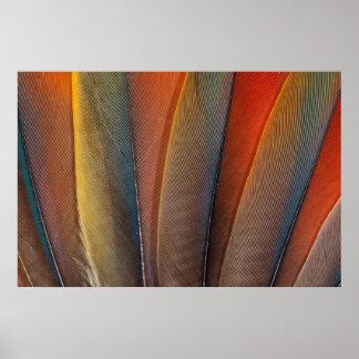 Scarlet Macaw Wing Detail Poster