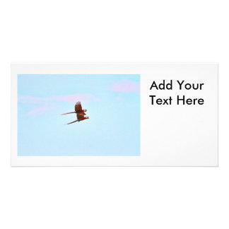 Scarlet Mackaw Couple Flying Personalized Photo Card