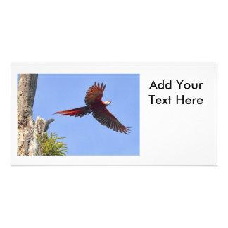 Scarlet Mackaw Flying Photo Greeting Card