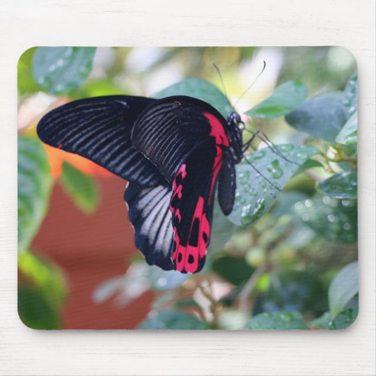 Scarlet Mormon Butterfly Mouse Pad