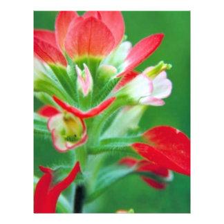 Scarlet Paintbrush Flyer Design