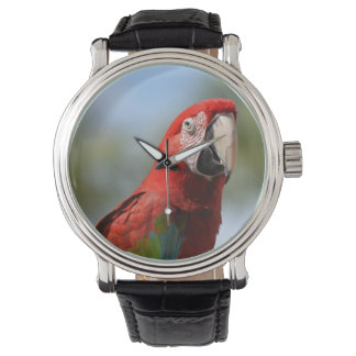 Scarlet Red Macaw Watches
