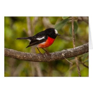 Scarlet Robin Greeting Card