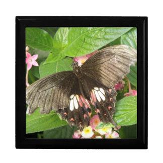 Scarlet Swallowtail Butterfly Macro Gift Box